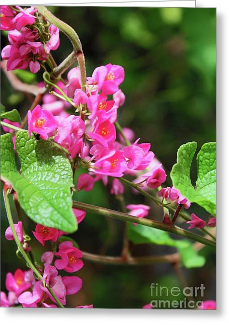 Greeting Card featuring the photograph Pink Flowering Vine3 by Megan Dirsa-DuBois