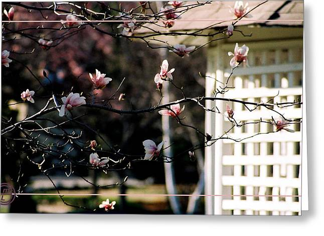 Pink Flowers At Gazebo Greeting Card by Helena M Langley