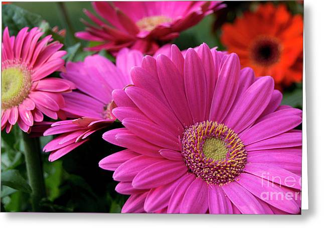 Greeting Card featuring the photograph Pink Flowers by Brian Jones