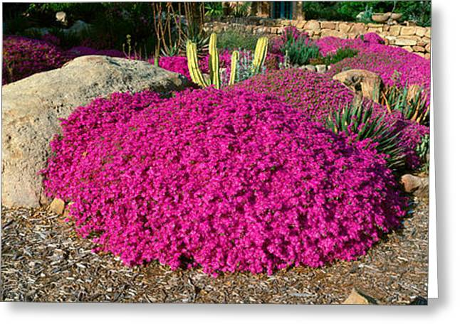 Pink Flowers, Center For Earth Greeting Card by Panoramic Images