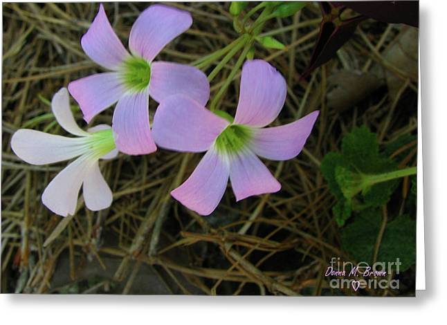 Greeting Card featuring the photograph Pink Glow by Donna Brown