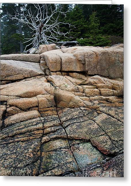 Pink Granite And Driftwood At Schoodic Peninsula In Maine  -4672 Greeting Card