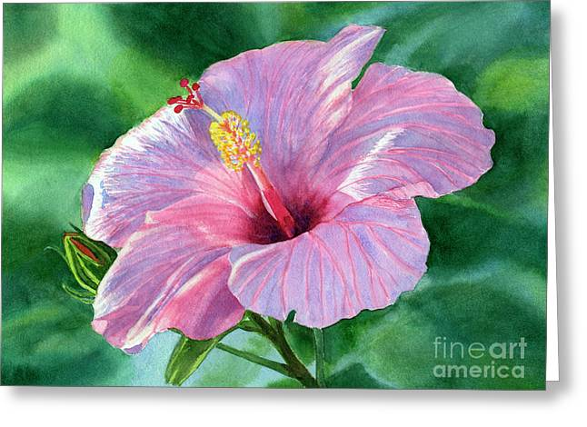 Pink Hibiscus Flower With Leafy Background Greeting Card by Sharon Freeman