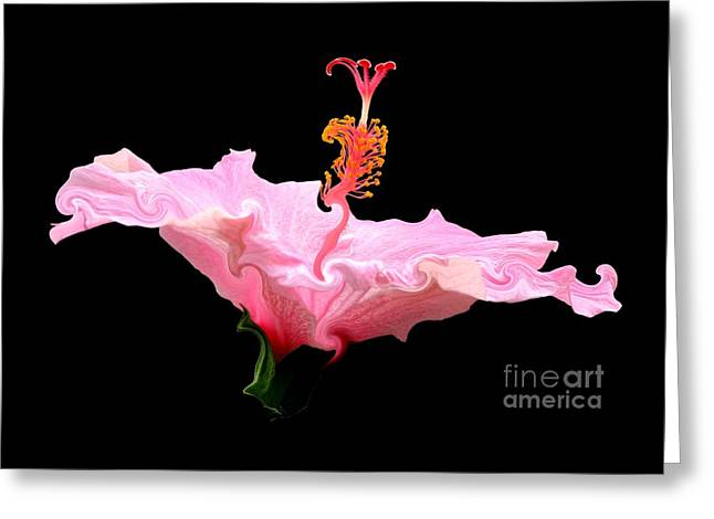 Pink Hibiscus With Curlicue Effect Greeting Card by Rose Santuci-Sofranko