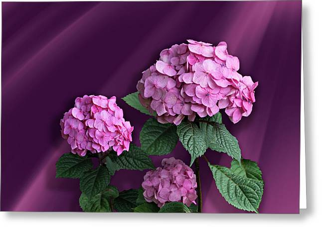 Pink Hydrangea Greeting Card by Judy Johnson