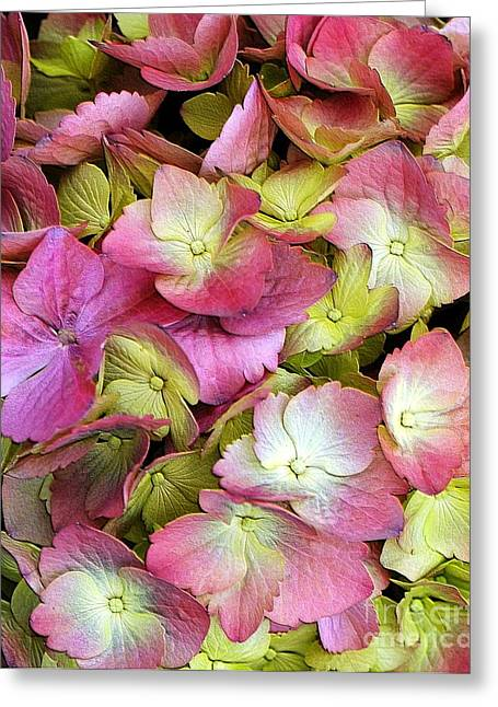 Pink Hydrangea Greeting Card by Kathleen Struckle