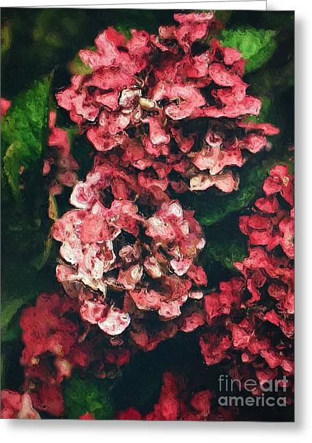 Pink Hydrangeas Greeting Card by Amy Cicconi