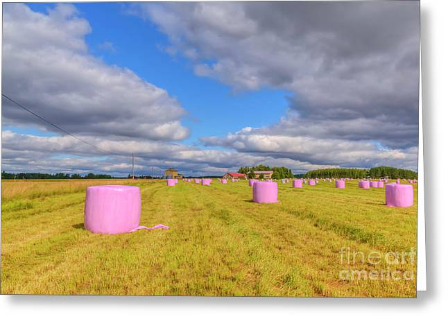 Pink In The Field Greeting Card