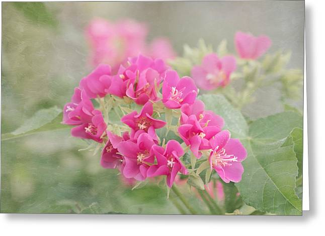 Pink In The Mist Greeting Card