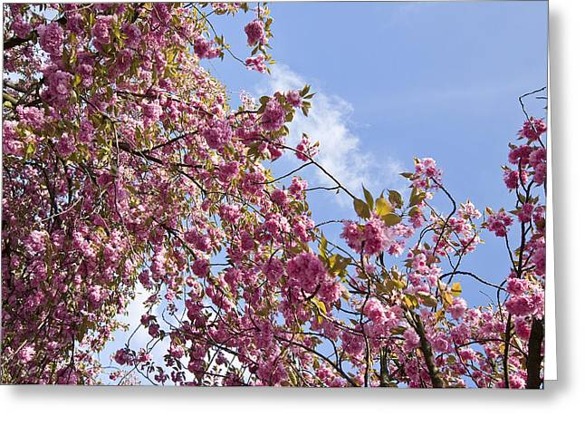 Pink Greeting Card by Krista  Corcoran Photography
