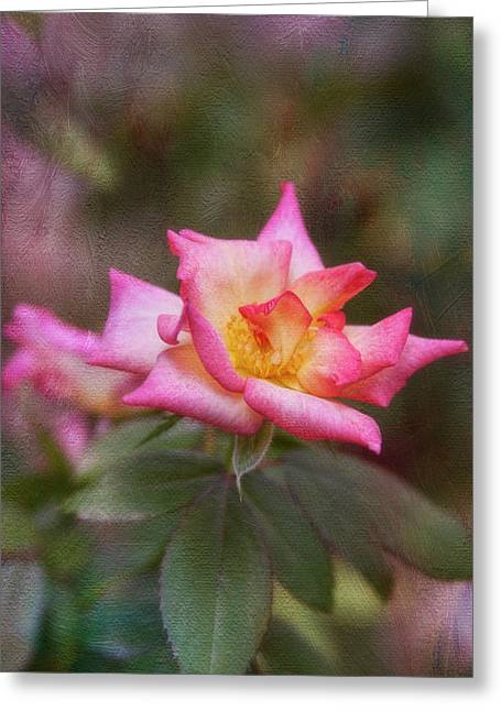 Pink Lady Greeting Card by Joan Bertucci