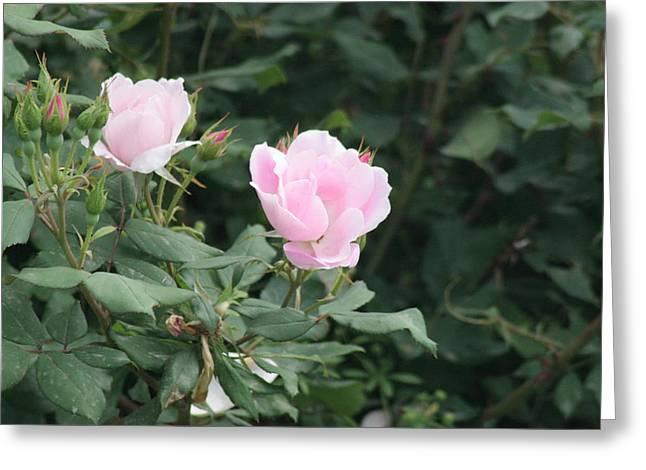 Pink Lady Greeting Card by ShadowWalker RavenEyes Dibler