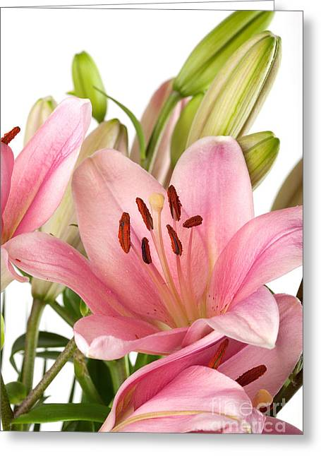 Pink Lilies 07 Greeting Card by Nailia Schwarz