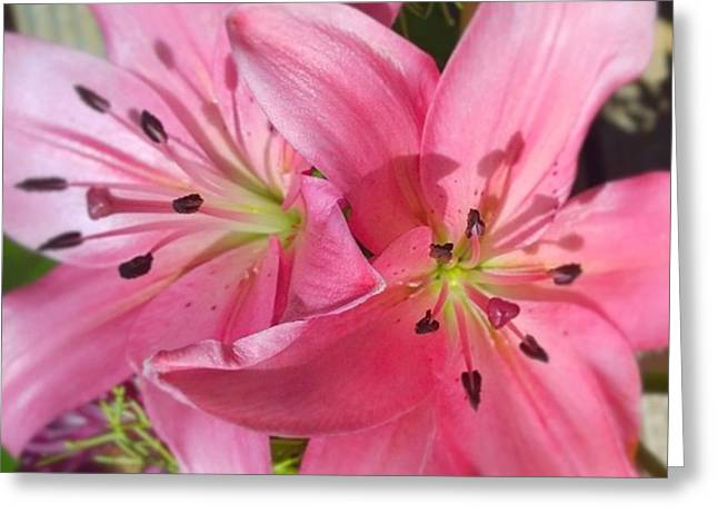 #pink #lilly Detail. Love The #colors Greeting Card
