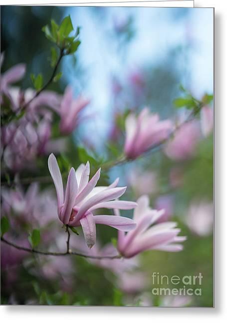 Pink Magnolia Blooms Peaceful Greeting Card by Mike Reid