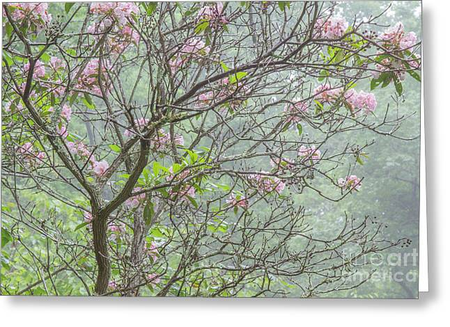 Greeting Card featuring the photograph Pink Mountain Laurel by Chris Scroggins