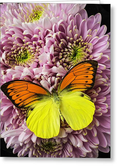 Pink Mums Yellow And Orange Butterfly Greeting Card
