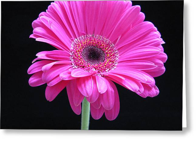 Greeting Card featuring the photograph Pink On Black by Patricia Januszkiewicz