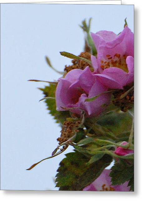 Pink On The Edge Greeting Card by Jean Booth