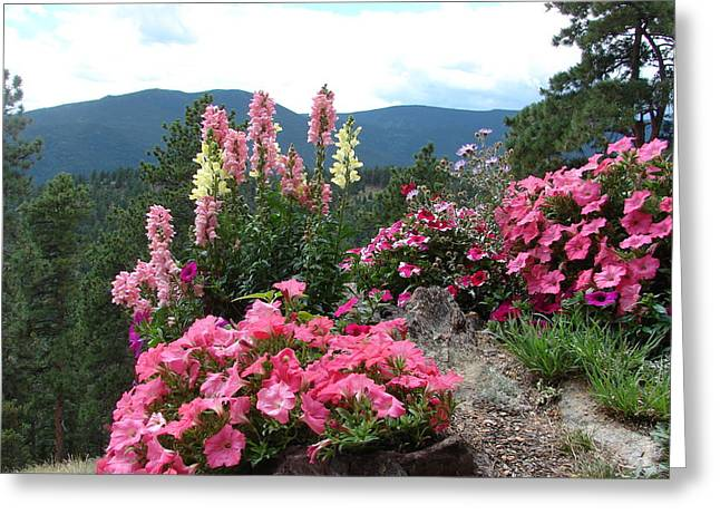 Pink On The Mountain Greeting Card by Jody Neumann