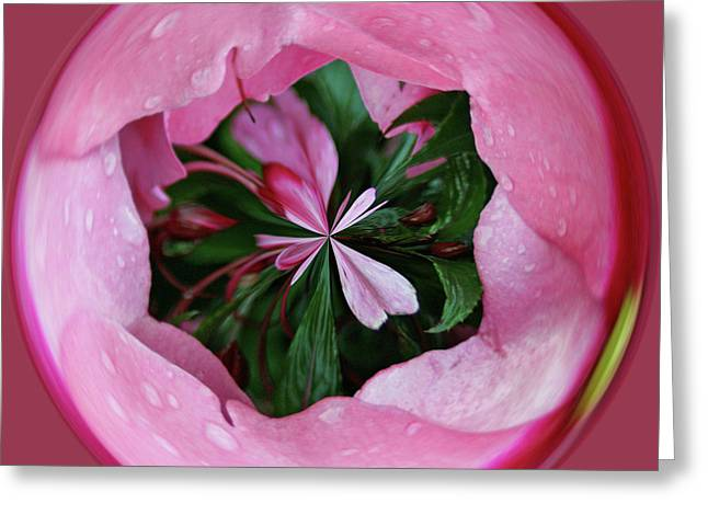 Greeting Card featuring the photograph Pink Orb by Bill Barber