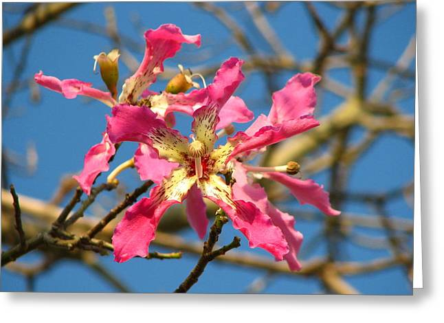 Pink Orchid Tree Greeting Card by Carla Parris