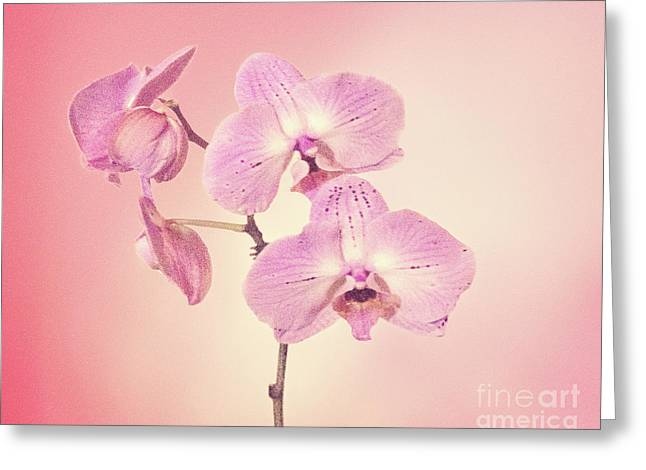 Greeting Card featuring the photograph Pink Orchids 2 by Linda Phelps