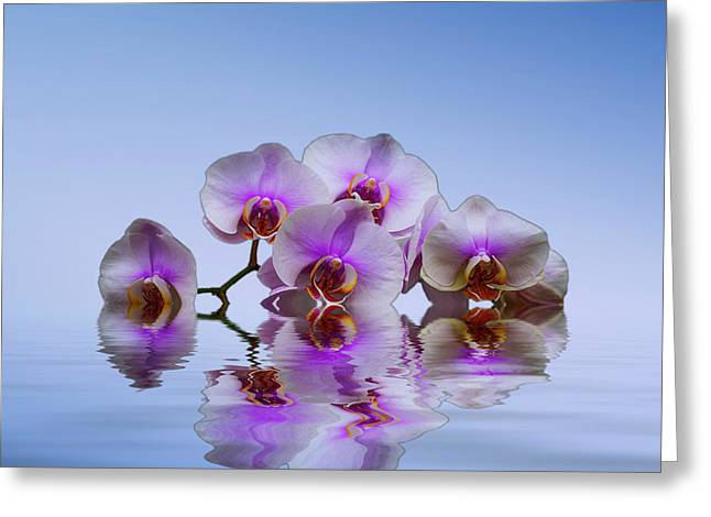 Pink Orchids Blue Background Greeting Card by David French