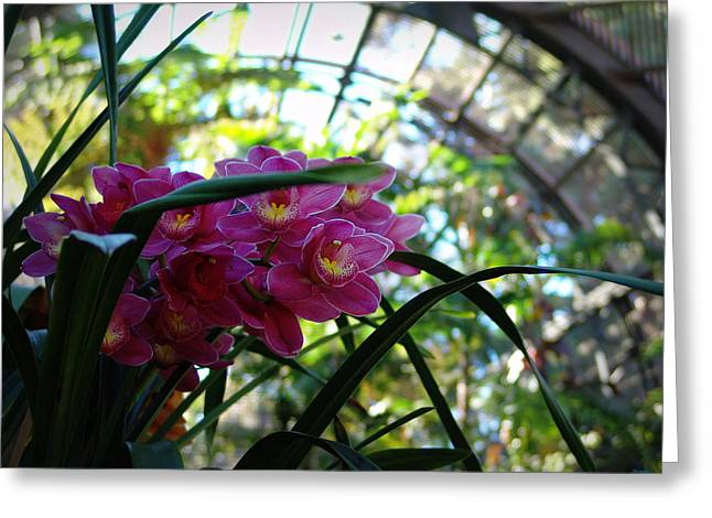 Pink Orchids Greeting Card by Glenn McCarthy Art and Photography