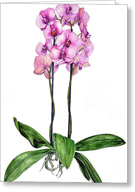 Greeting Card featuring the painting Pink Orchids by Heidi Kriel