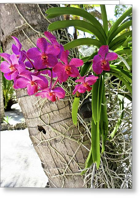 Pink Orchids On Palm Tree Greeting Card by Tony Grider