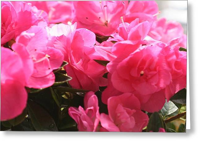 Pink Passion Greeting Card by Amy Holmes