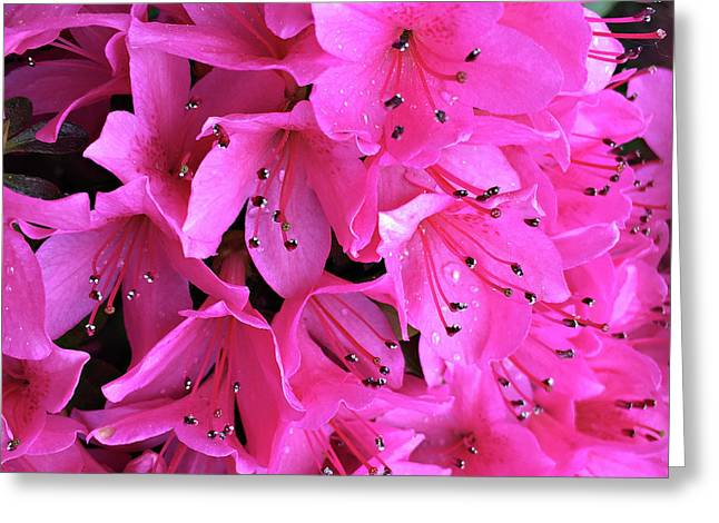 Greeting Card featuring the photograph Pink Passion In The Rain by Sherry Hallemeier
