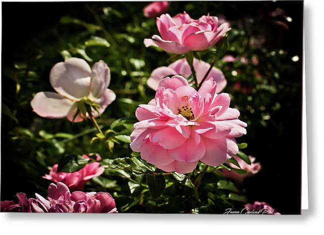 Greeting Card featuring the photograph Pink Passion  by Joann Copeland-Paul