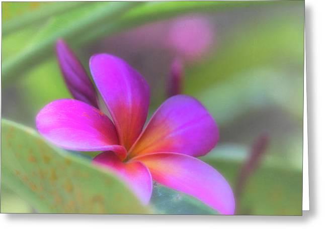 Pink Peekaboo Plumeria Greeting Card