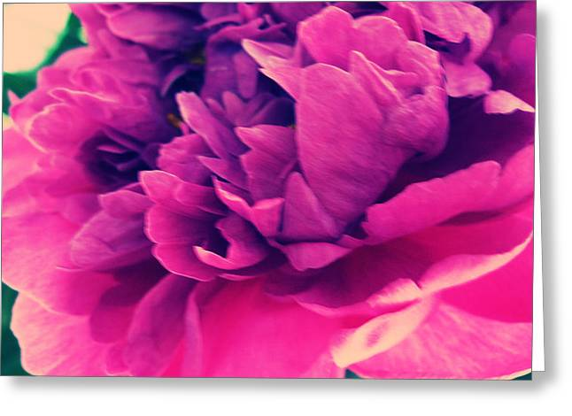 Greeting Card featuring the photograph Pink Peonie by Paul Cutright