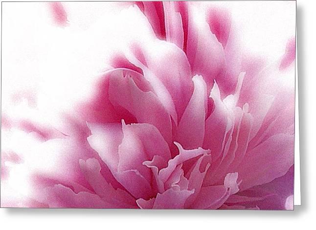 Pink Peony Greeting Card by Addie Hocynec