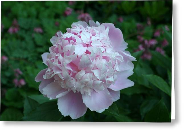 Greeting Card featuring the digital art Pink Peony by Barbara S Nickerson