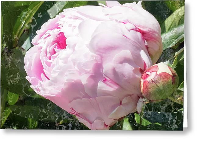 Pink Peony IIl Greeting Card