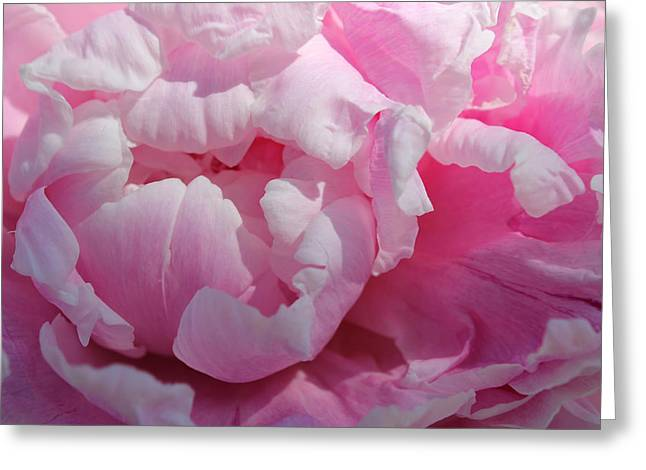 Pink Peony Greeting Card by Lynne Guimond Sabean