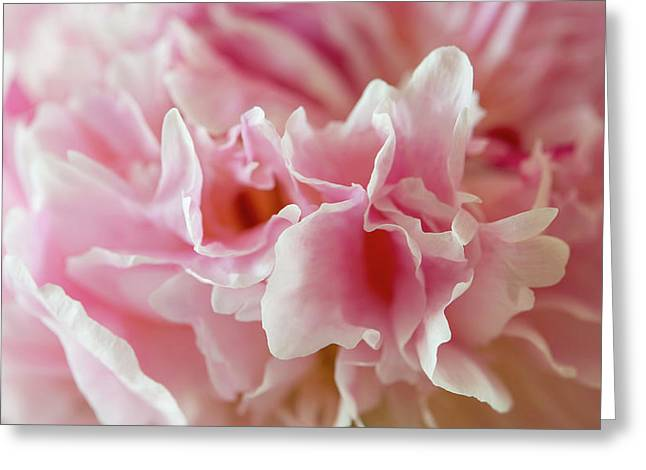 Greeting Card featuring the photograph Pink Perfection by Wendy Wilton