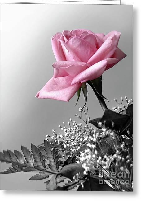 Proposal Greeting Cards - Pink Petals Greeting Card by Carlos Caetano