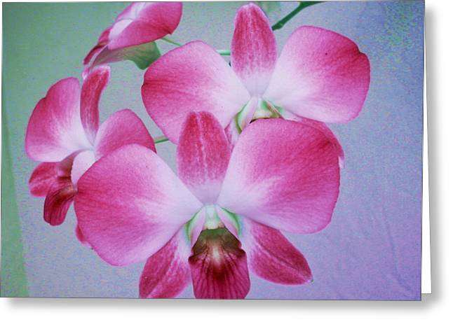 Pink Phalenopsis Greeting Card by Charles Yates