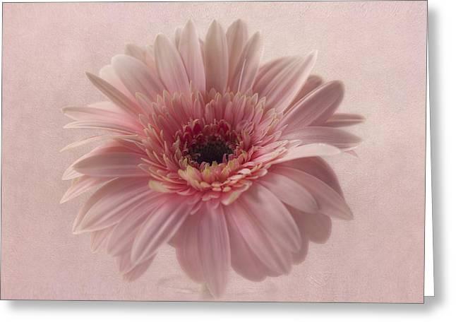 Pink Pink Pink Greeting Card