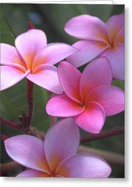 Pink Plumeria Greeting Card by Brian Harig