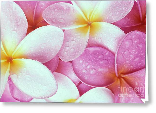 Pink Plumeria Greeting Card by Carl Shaneff - Printscapes