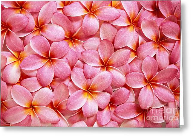 Pink Plumeria Greeting Card by Kyle Rothenborg - Printscapes