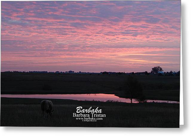 Pink Pond And Cow #5110 Greeting Card