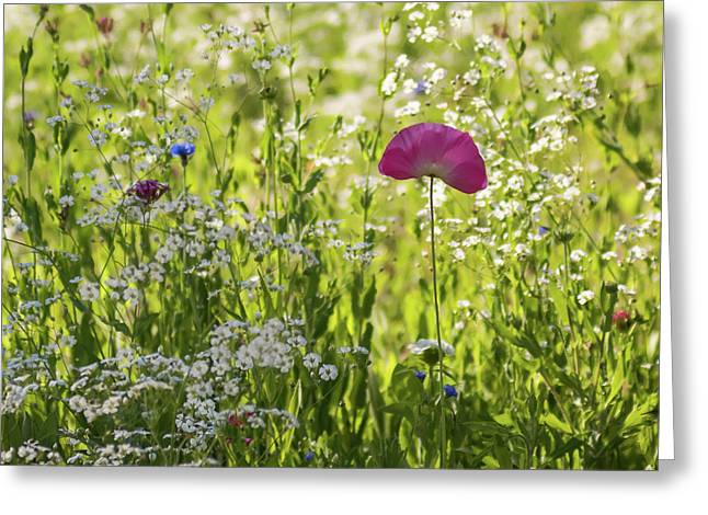 Pink Poppy And Wildflowers Square Greeting Card