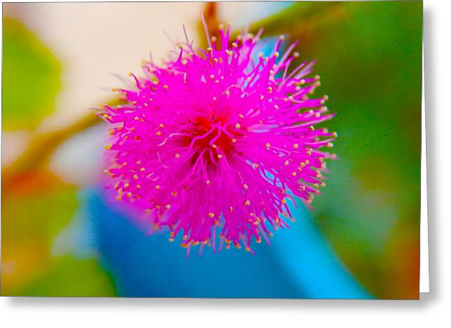 Pink Puff Flower Greeting Card